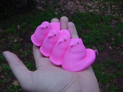 Peeps in the hand.  Photo by: Nate Steiner
